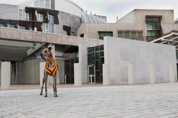 lurcher at Scottish Parliament building