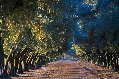 olivetree path-0075