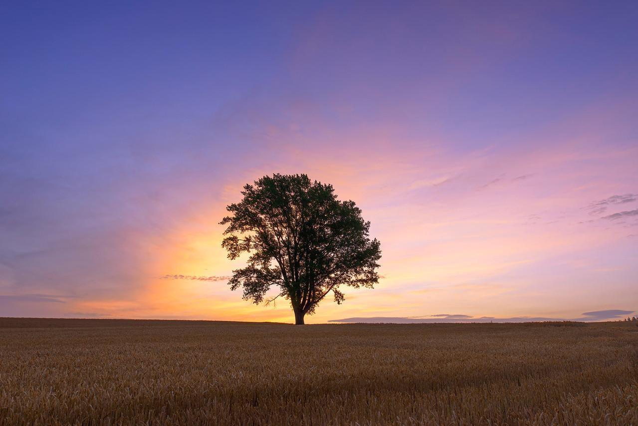 Philosopher's Tree