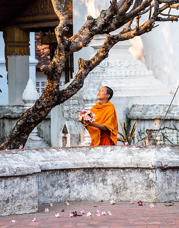 Monk with frangipani flowers
