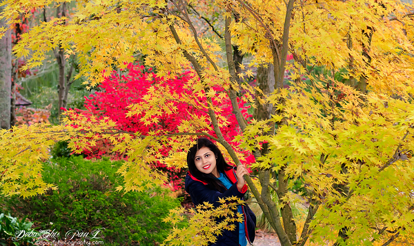 Amidst the sea of fall colors surrounding by gorgeous Japanese Maples.... @ Gibbs Garden - GA