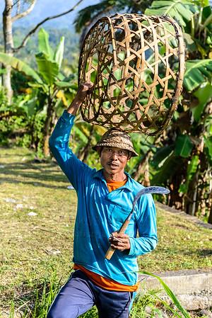 Indonesian farmer harvesting rice fields