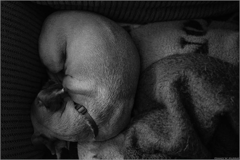 Slumbering Danni ... [X100F.2018.2967]