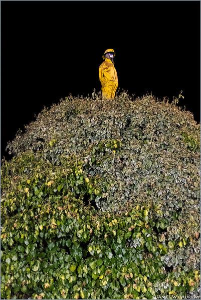 Virginia, Lark Avenue Mannequin (Yellow Diligence) ... [X100F.2018.2497]