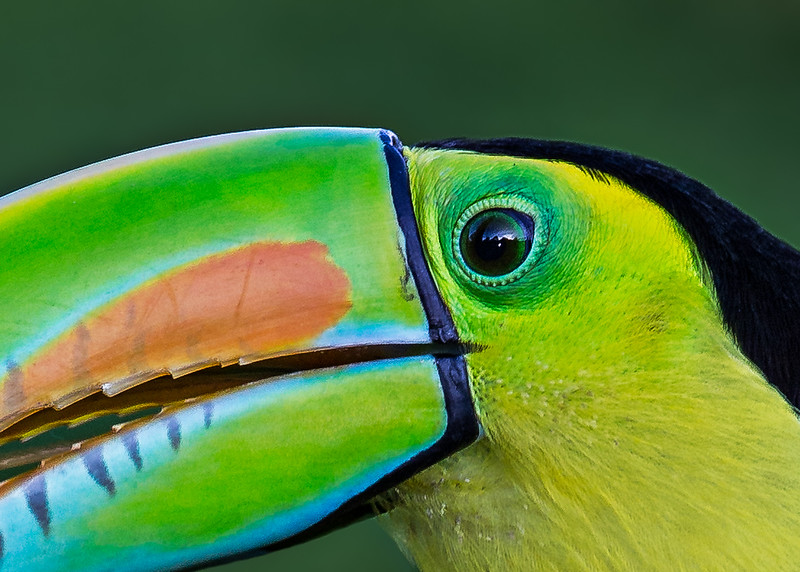 Keel-Billed Toucan - taken in Costa Rica.