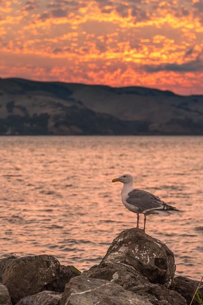 A Bird's Gotta Enjoy the Sunset