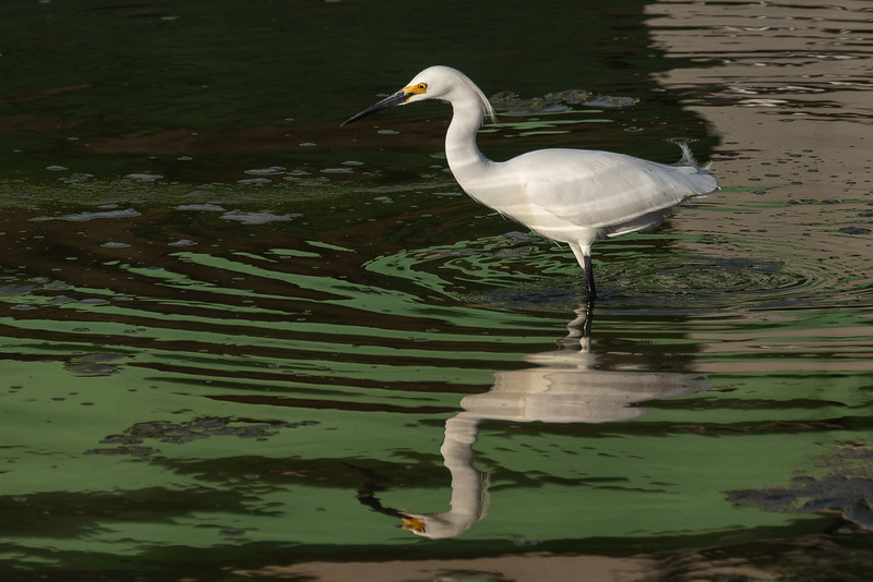 Bird in a Ripple