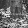 Gravestone, Old Jewish Cemetery. Monochrome.