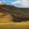 Small Farm I