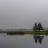 Foggy Reflections