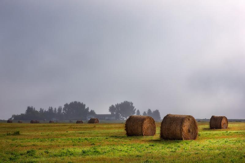 Fog Over Hay Bales