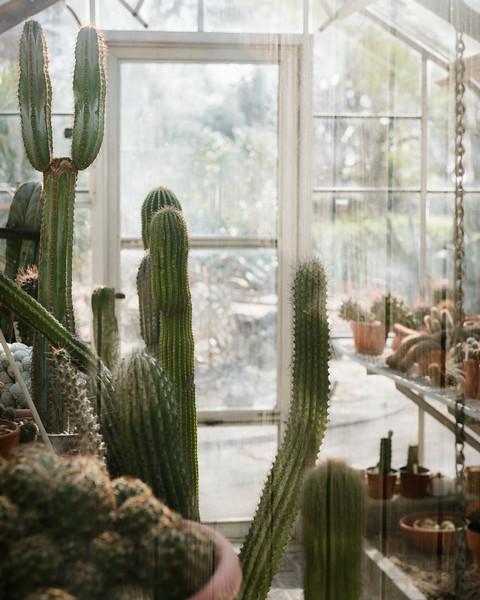 Cactus Greenhouse-9766