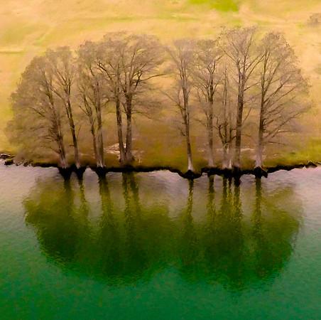 Tree Bank along Lake Travis near the 360 Bridge