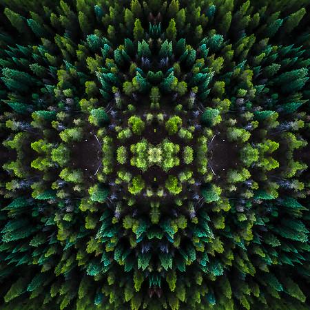 Symmy-Tree