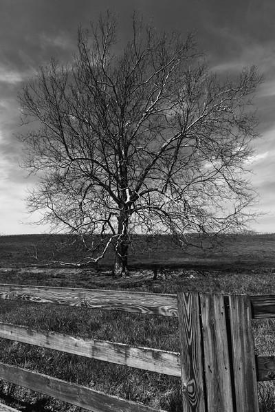 VA Trees