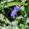 - April snow showers on early spring flowers