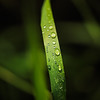 - That morning dew