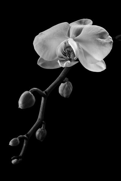 -Delicate beauty