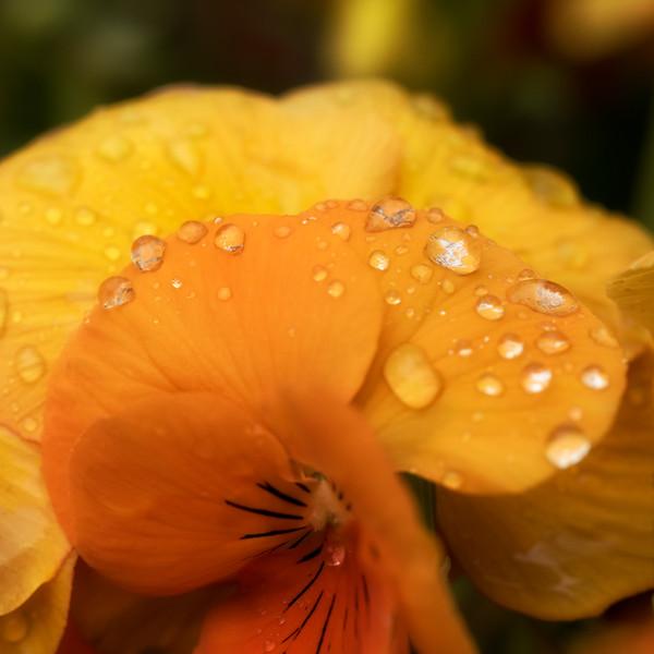 -Rain drops