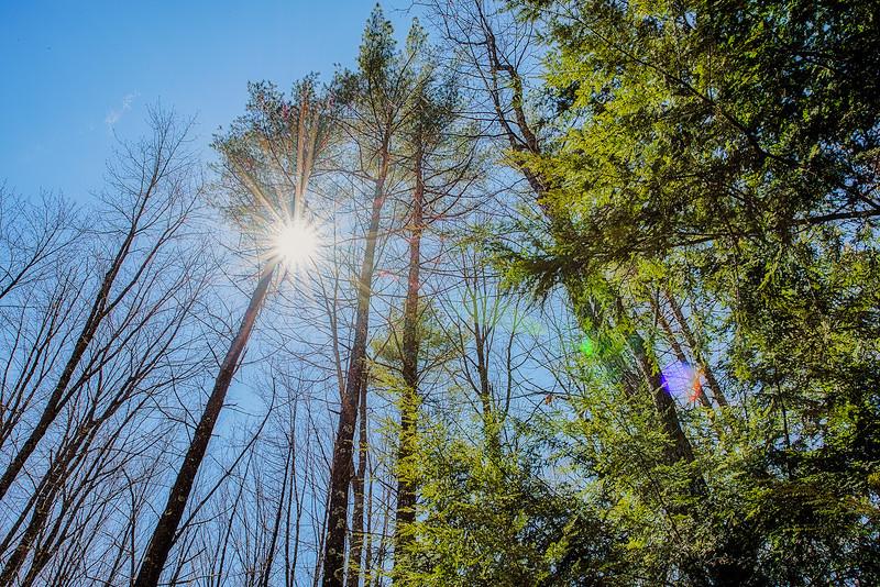-Splintered sunlight