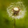 - Half a wish