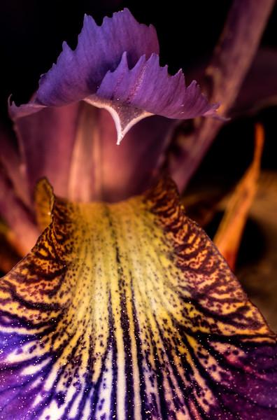 - Iris
