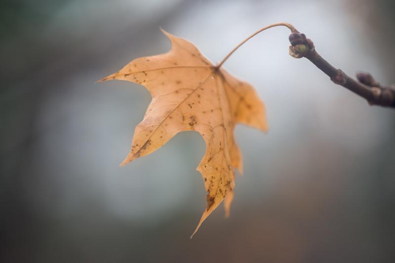 - Hanging on