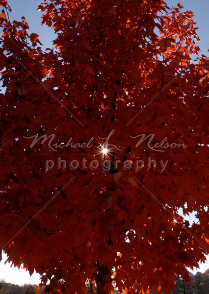 """<font size=4>Week 23  (Mike) -<br>""""Breaking Through"""" <font size=3> It was on a clear crisp Autumn day that I noticed the flaming red leaves on this tree.  I knew that I had to take a photo of this beautiful tree. I turned my truck around and got my camera out. When I got out of my truck I noticed the rays of sunlight breaking through the leaves. After trying several different angles I chose this perspective and captured this beautiful image.  The sun beams are real, they are not photoshopped in. The best part of the story is that this tree was in the parking lot of a Publix grocery store in Trussville, AL. <br>Tech info: Aperture Priority mode, daylight white balance,  f22, at 1/4th second on tripod. Matrix Metering at ISO 100."""