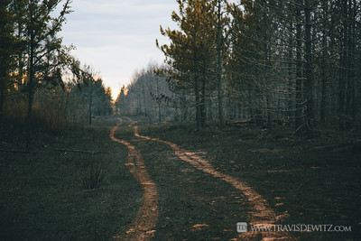 germann_road_forest_fire_tire_tracks_in_soot