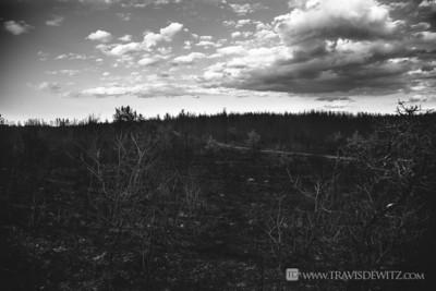 germann_road_forest_fire_black_landscape