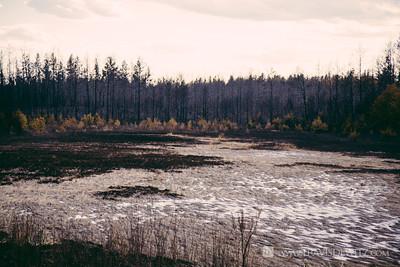 germann_road_forest_fire_marsh