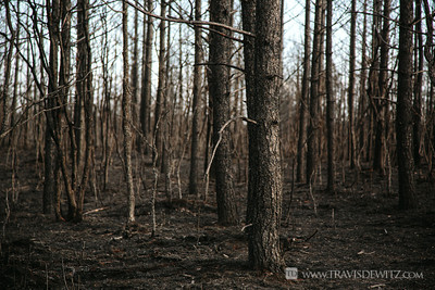 germann_road_forest_fire_destroyed_woods