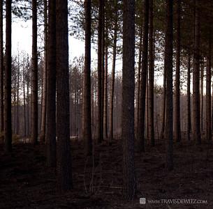 germann_road_forest_fire_sunset_pine_woods