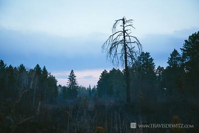 germann_road_forest_fire_lone_tree