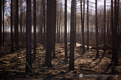germann_road_forest_fire_burnt_trees