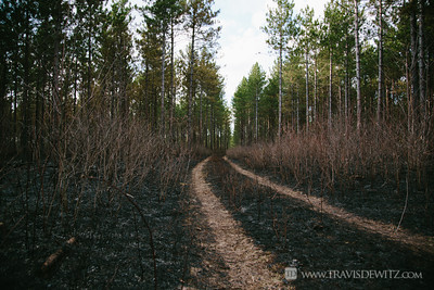 germann_road_forest_fire_tire_tracks