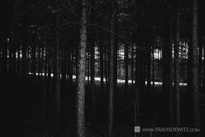 germann_road_forest_fire_black_woods