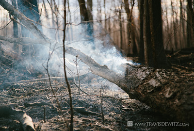 germann_road_forest_fire_smoking_log