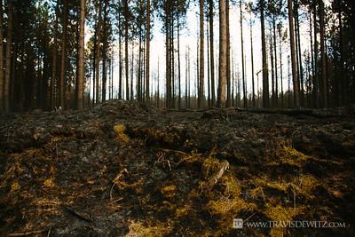 germann_road_forest_fire_green_moss