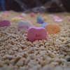 "Candy Hearts in Cat Litter (Day 40)  To get back to the shot of the day, click <a href=""http://www.nawset.com/gallery/7032225_oFapa#473107193_LdEqy"">here</a>.   (2009-02-13 5:11pm)"