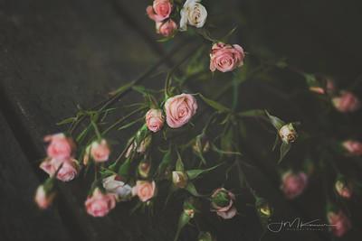 99/100 - Mini Roses