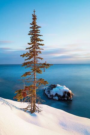 Tree and rock