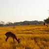 Scène très tôt le matin, Afrique du sud