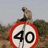 Parc Kruger, Afrique du sud