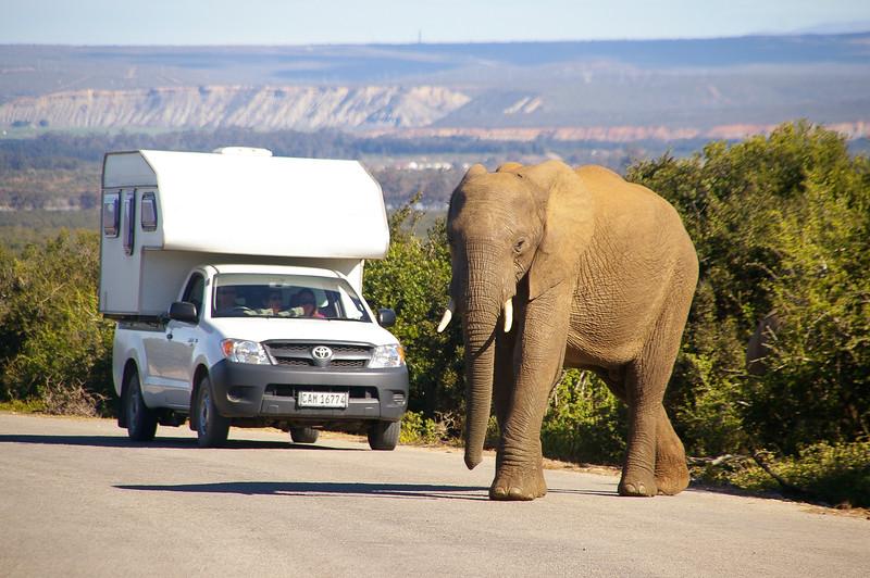 Elephant, park Kruger, Afrique du Sud