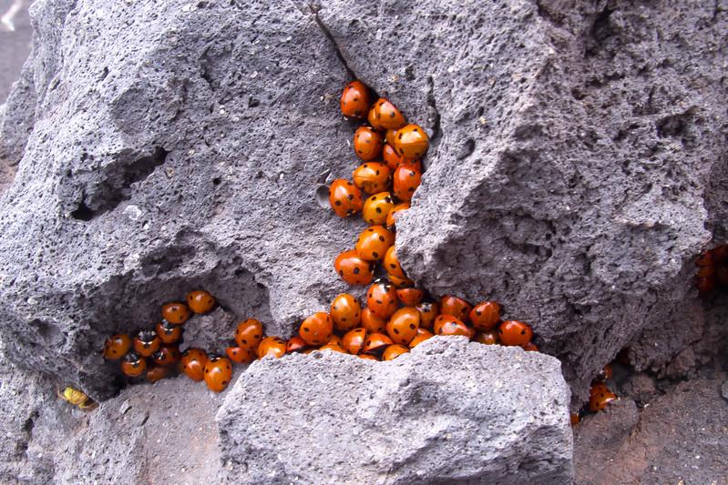 Bonne chance ! Sur les pentes de l'Etna