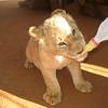 Lionceaux, Johannesburg, Afrique du sud