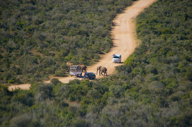 Scène du parc Kruger