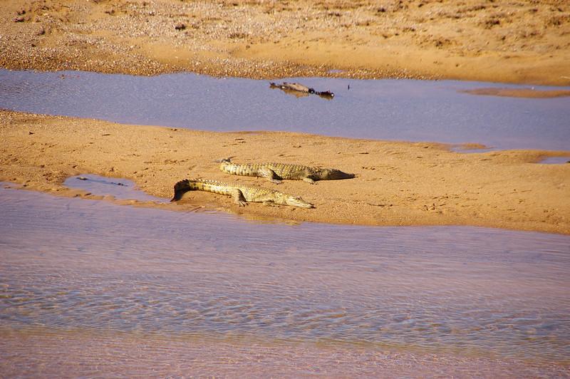 Crocos, frontière Zimbabwe- Afrique du sud