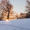 Truncated sun in winter park